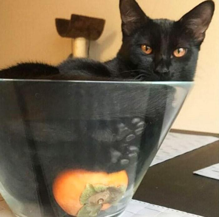 10 фото, на которых хозяева котов поделились странными хобби своих питомцев