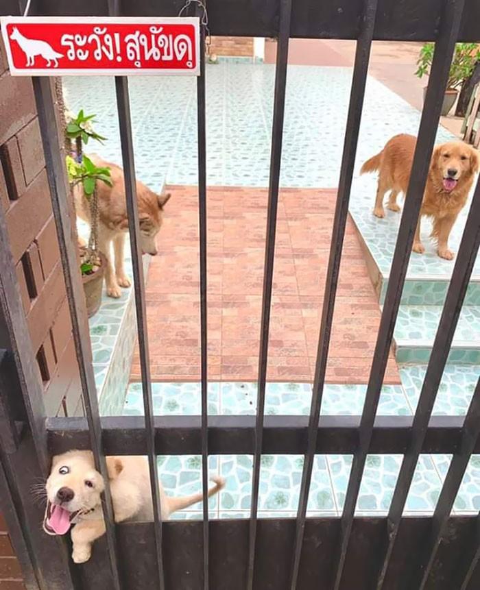 10 зверски злых собак, которых не предупредили, что им нужно быть грозными