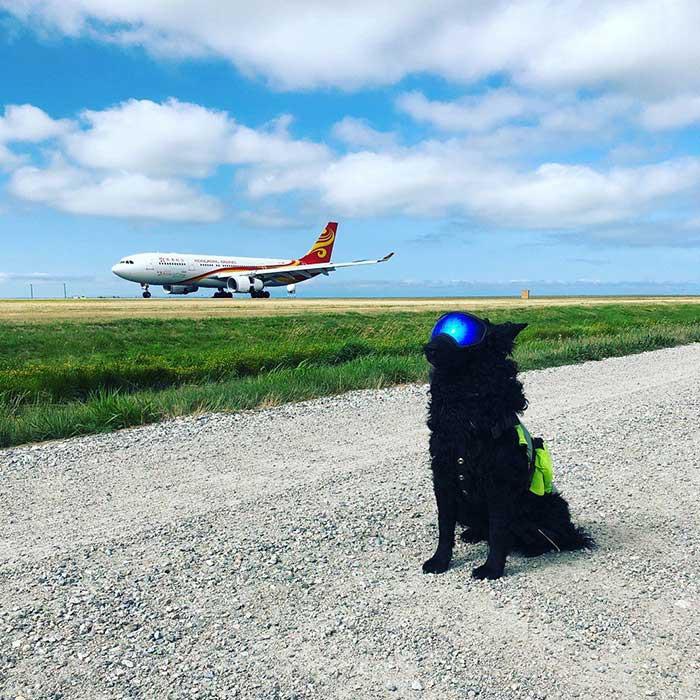 12 фотографий собак, которые имеют настоящую профессию