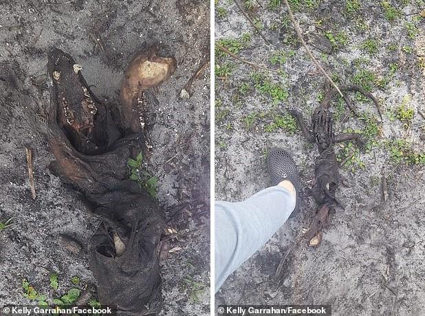 Останки непонятного существа найдены во Флориде