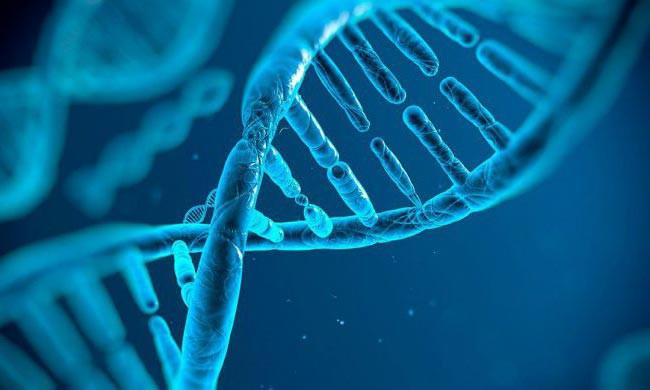 Установлено: генетика влияет на здоровье человека