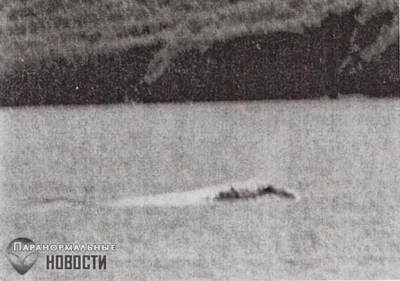 Наблюдение необычных зверей на Аляске