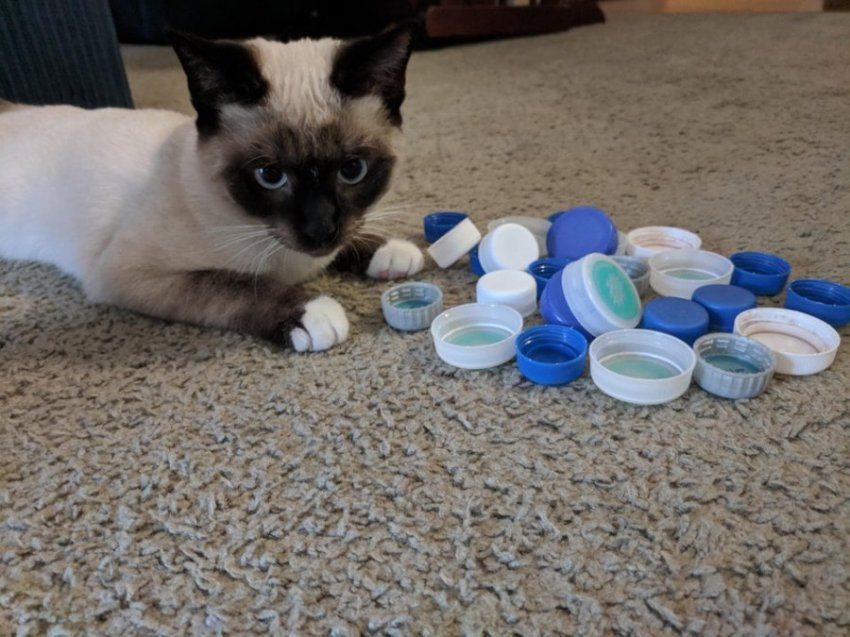 10 фото котов, которые сломали мозг своих владельцев странными привычками