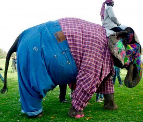 Фотографии забавных животных, которых решили принарядить