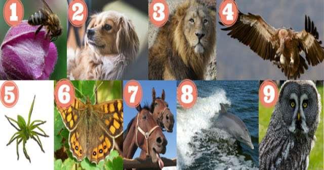 Тест по картинке: узнайте про преобладающие черты своего характера