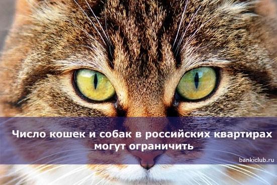 Число кошек и собак в российских квартирах могут ограничить