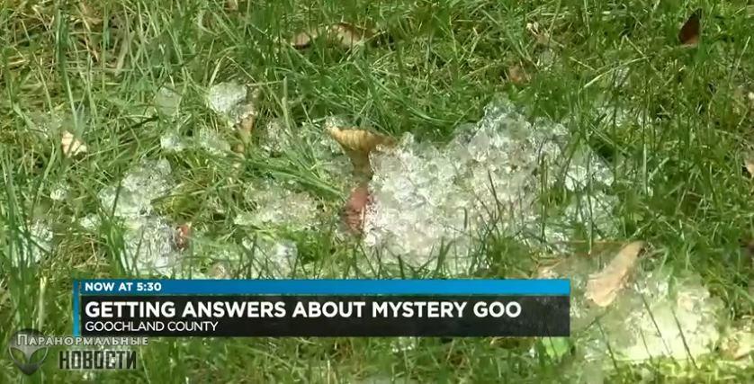 На траве в Вирджинии нашли желеподобные сгустки странного вещества