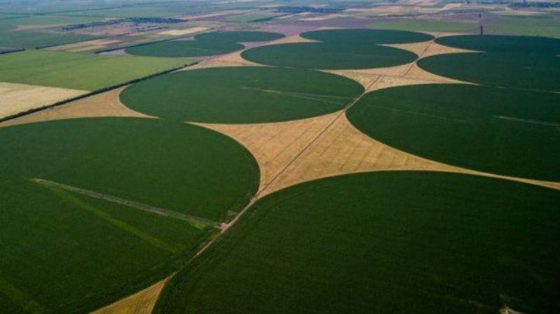 На Херсонщине появились круги на полях