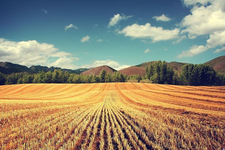 Forbes опубликовал рейтинг крупнейших землевладельцев России