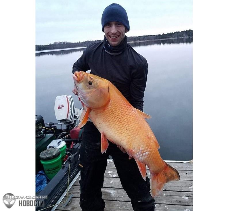 Огромную оранжевую рыбу-мутанта поймали в американском озере