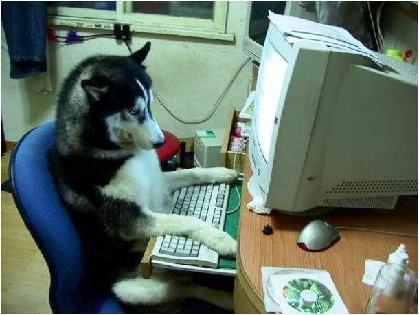 10 смешных фото животных, выполняющих человеческую работу