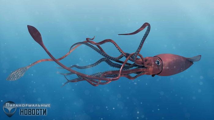 В Мексиканском заливе засняли гигантского кальмара - Паранормальные новости