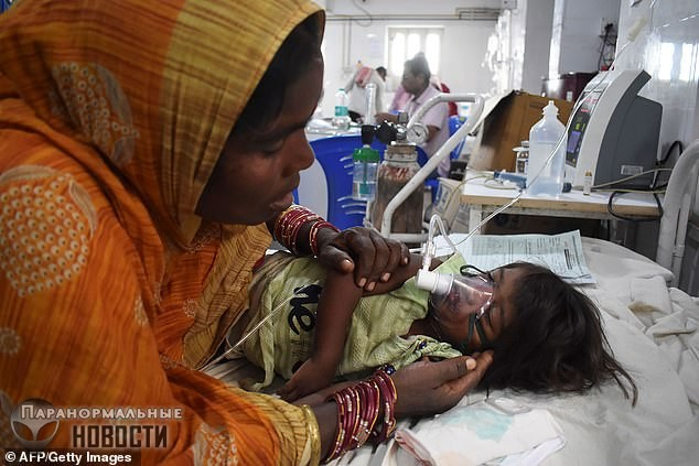 В Индии из-за фруктов личи умерло уже 152 ребенка - Паранормальные новости