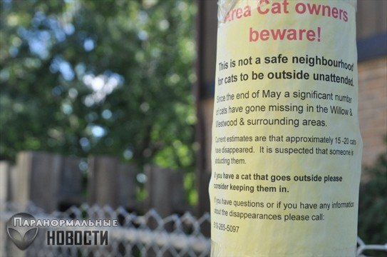Загадочные массовые исчезновения домашних кошек и собак - Паранормальные новости
