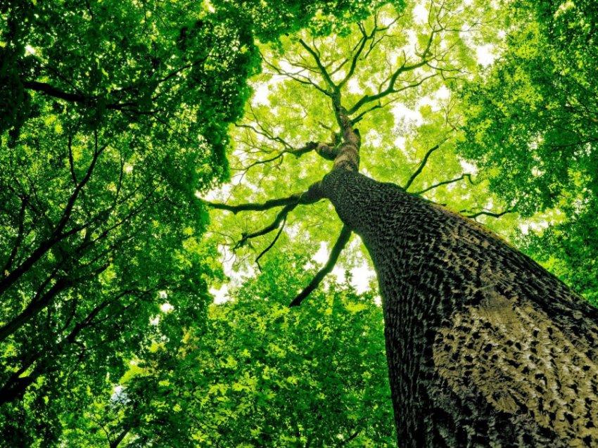 Тест по картинке: Выберите дерево и узнайте, что сейчас происходит в вашей жизни