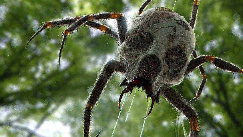 В Африке обитают гигантские пауки: длина созданий больше двух метров