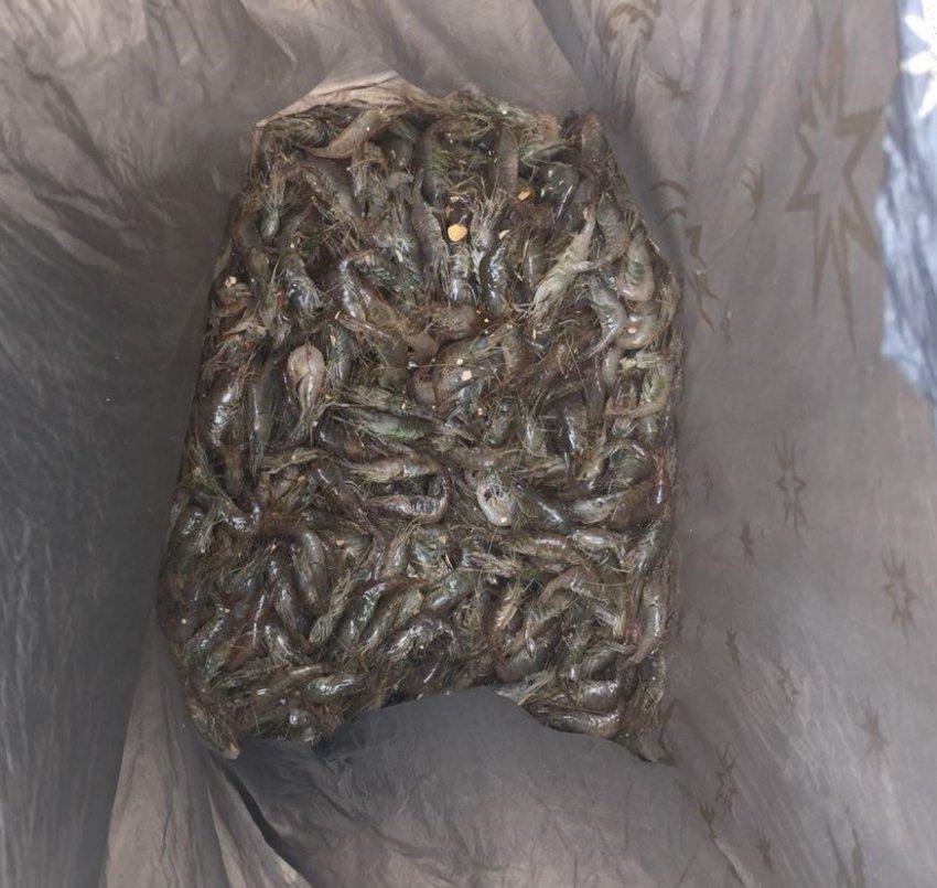 В Темрюке за браконьерство осудили местного жителя