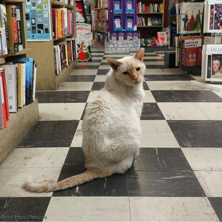10 фотографий котов, которые нашли себе работу