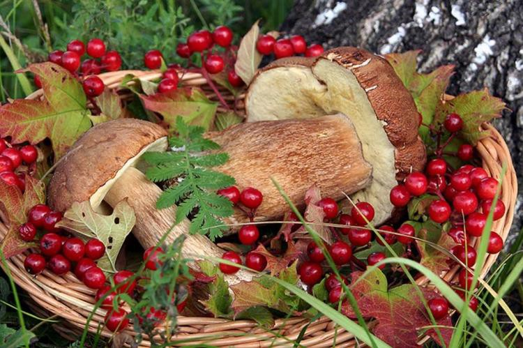 Грибы и ягоды в лесу будет контролировать Министерство сельского хозяйства