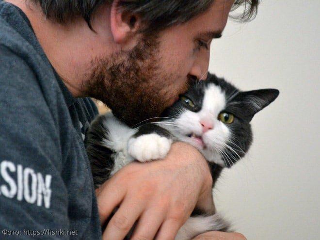 10 фото котов, которые терпеть не могут обниматься и целоваться