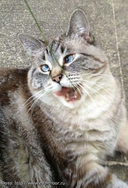 10 смешных котов, которых неожиданно сфотографировали