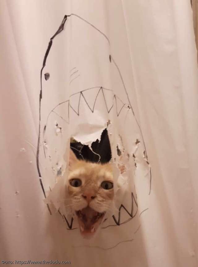 8 фото кота Масуки, который прославился в Сети благодаря любви к воде