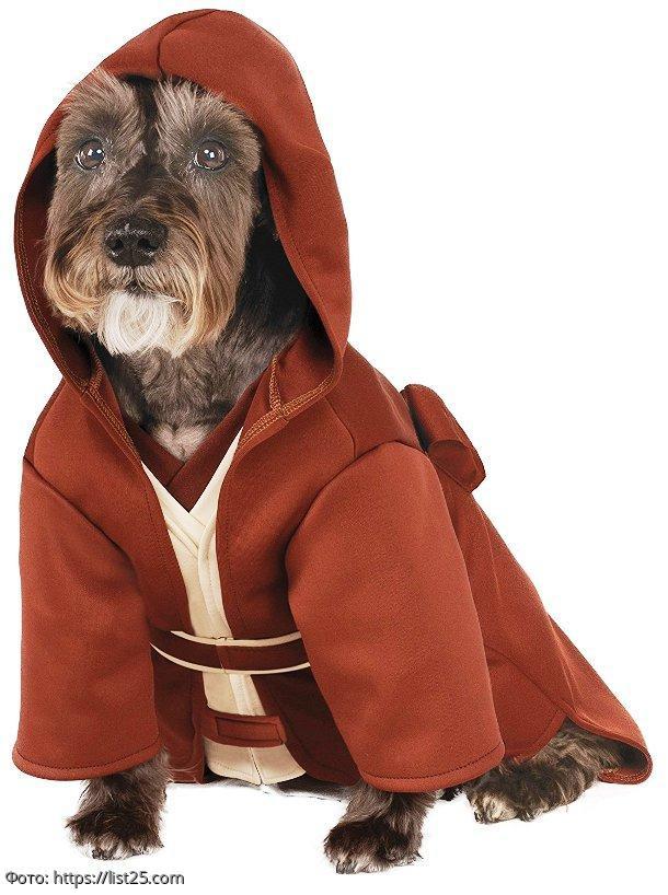 Самые смешные костюмы для собак на Хэллоуин