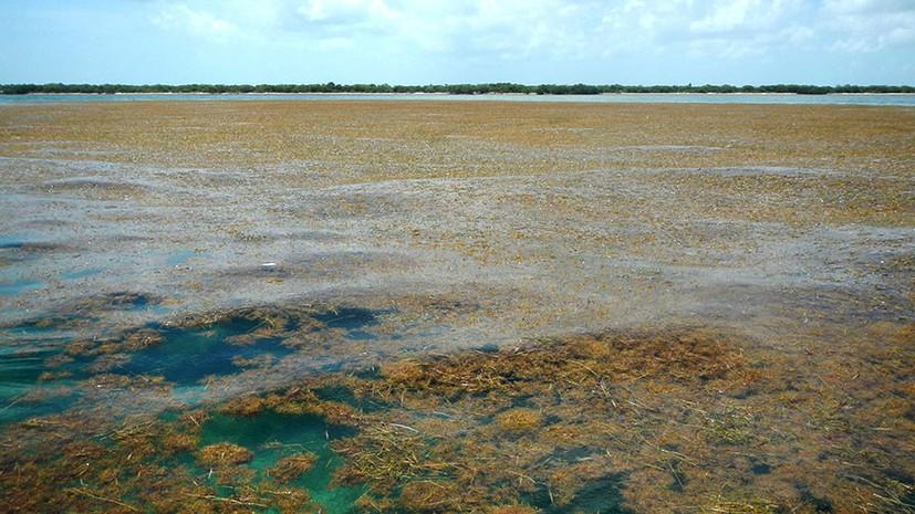 Аномалия в Атлантике: В океане стали активно размножаться бурые водоросли - Paranormal-news.ru