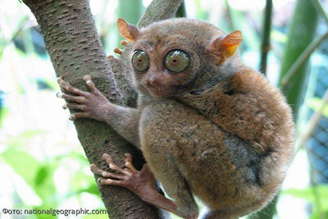 Самые странные животные мира, о существовании которых вы и не догадывались