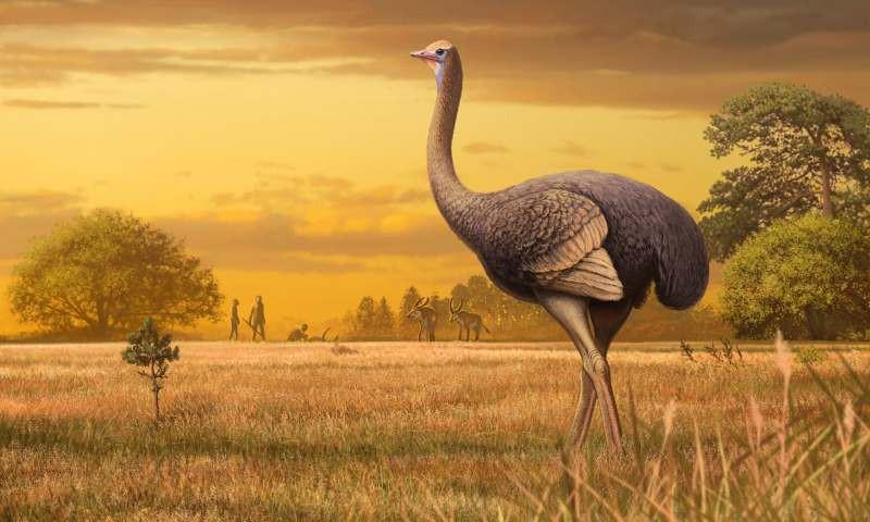 В Крыму в древности жили огромные птицы, которые застали первых людей - Paranormal-news.ru