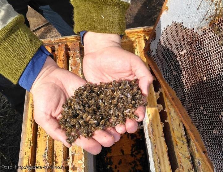 В России выявили причины массовой гибели пчел