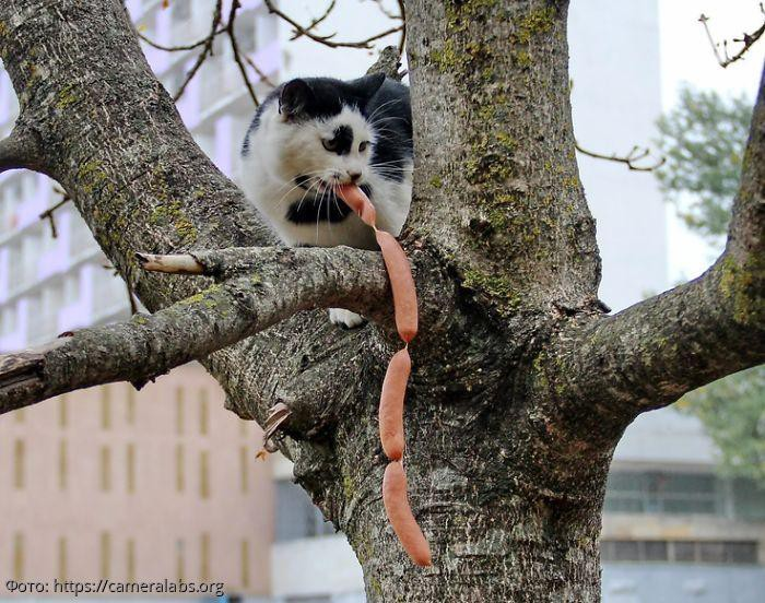 10 фото котов-воришек, которых застукали на месте преступления