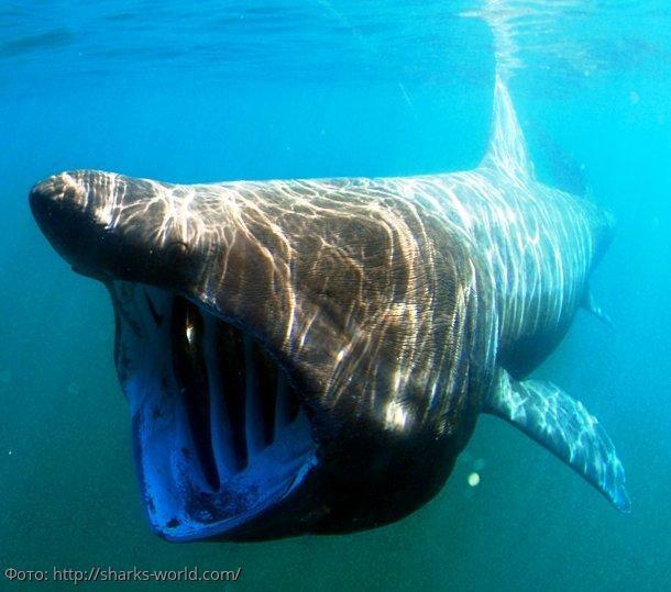 10 пугающих животных, в существование которых вы не поверите