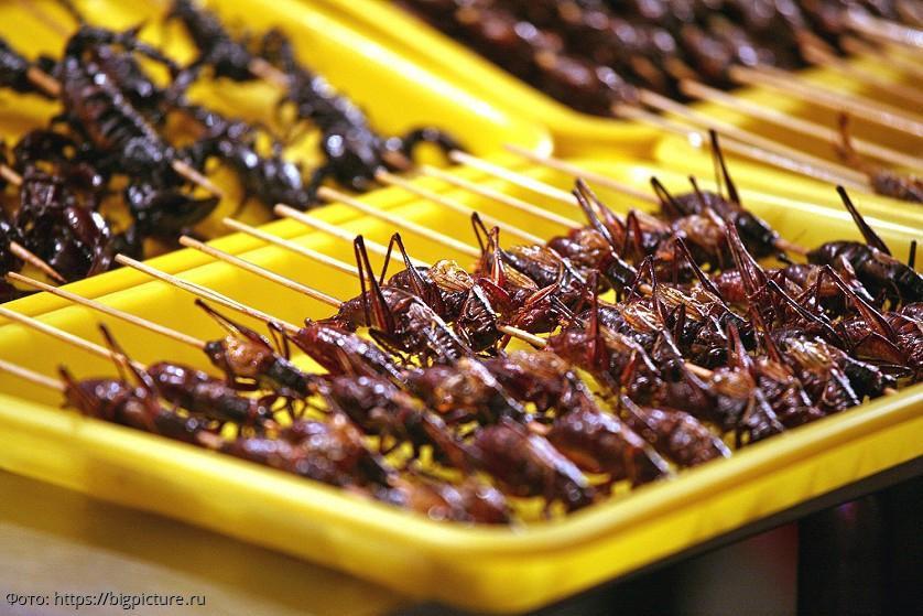 Ученые университета Терамо посоветовали людям кушать насекомых