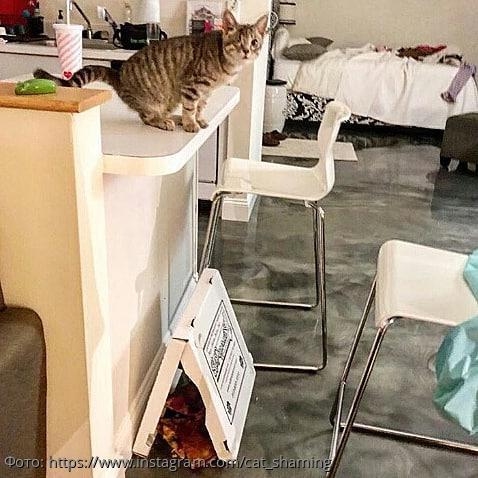10 фото котов-хулиганов, которых поймали с поличным