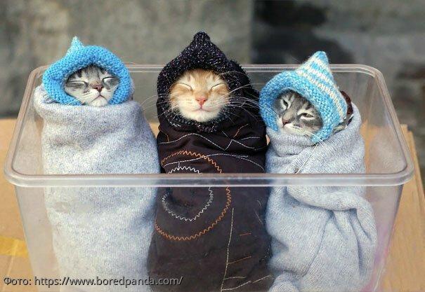 10 котов, которых запеленали, и от этого они стали очень милыми