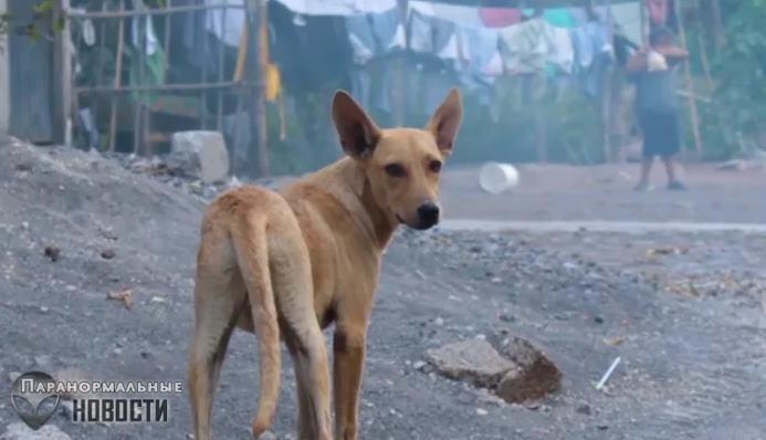 Странную собаку с женской грудью видели в Мексике | Загадочные существа | Паранормальные новости