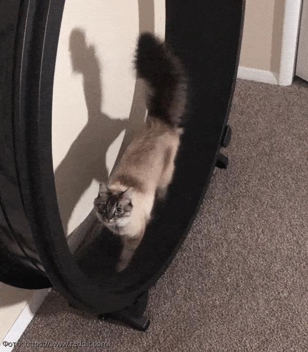 10 котов, которые эволюционировали в нечто большее