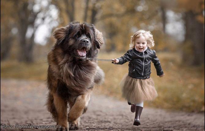 Установлено, что собака положительно воздействует на развитие ребёнка