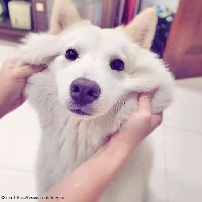 Фотографии милых собак с мягкими щечками