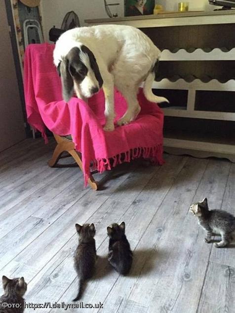 15 драматичных мордашек котов и собак в момент сильного потрясения