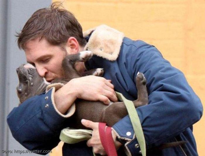 Опрос в США показал, что люди целуют своих собак чаще, чем вторых половинок