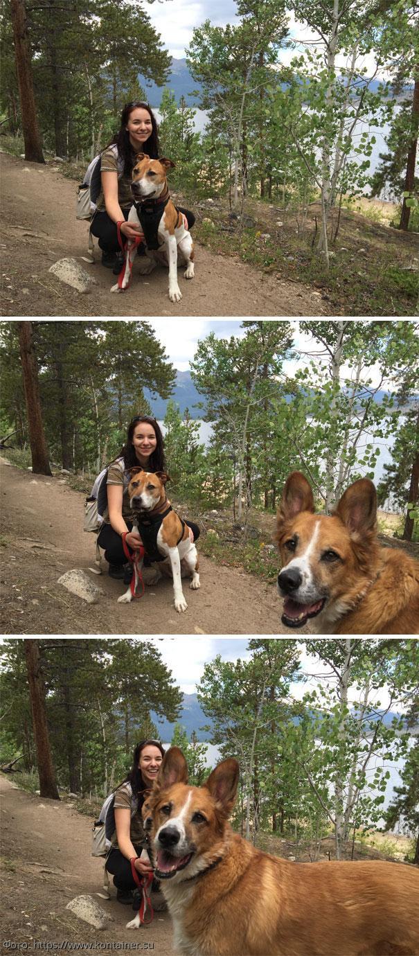 Забавные фотографии собак, которые неожиданно влезли в кадр