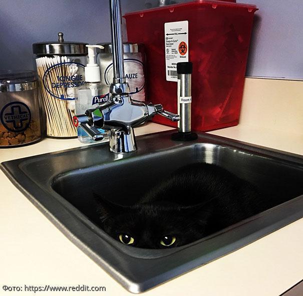 10 фото котов, которые боятся ветеринара и «незаметно» спрятались