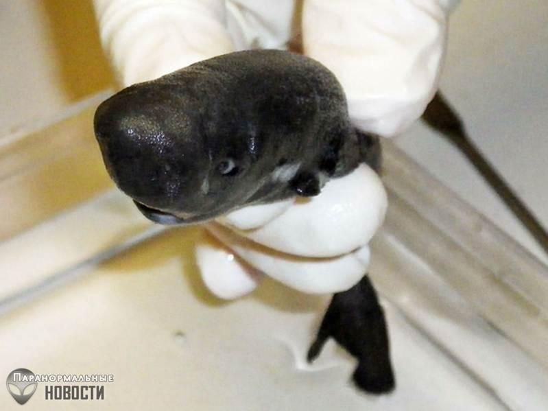 В океане нашли самую маленькую акулу в мире и она светится в темноте | Загадки планеты Земля | Паранормальные новости