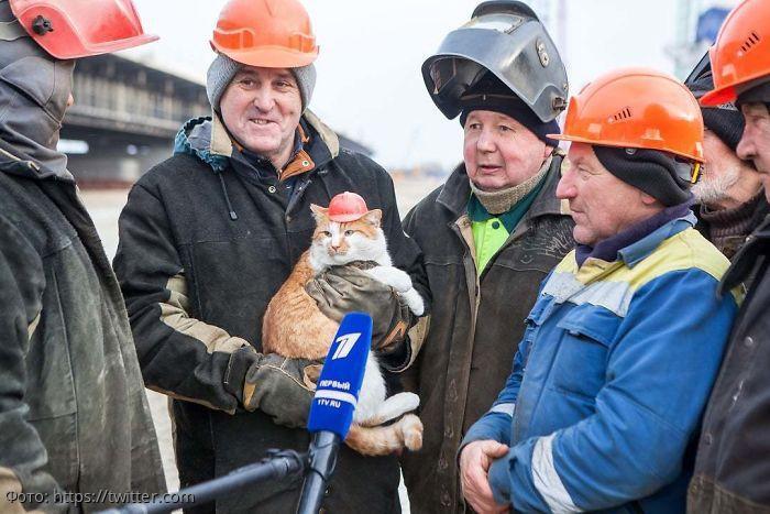 10 котов, у которых есть реальная работа