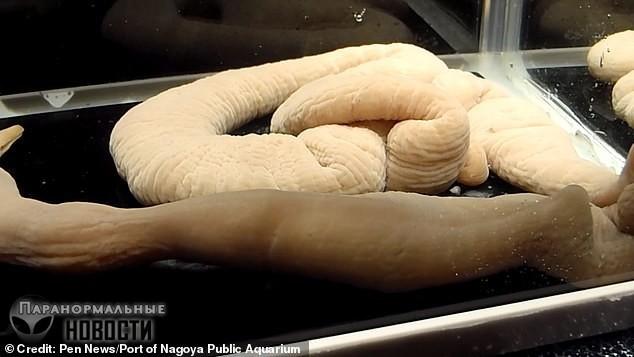 В аквариуме Японии обитают 70-сантиметровые черви, которые едят рыбу целиком | Загадки планеты Земля | Паранормальные новости