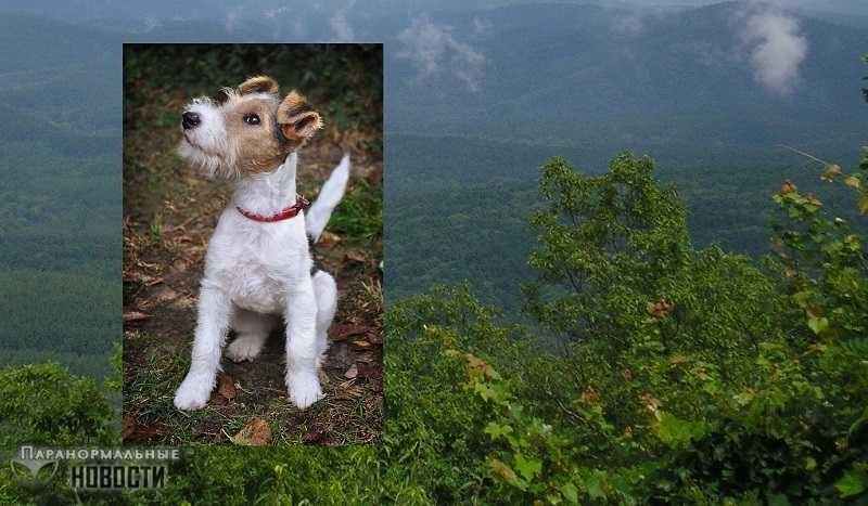 Легенда о Фокси - призрачной собаке, умершей от тоски по хозяину | Привидения | Паранормальные новости