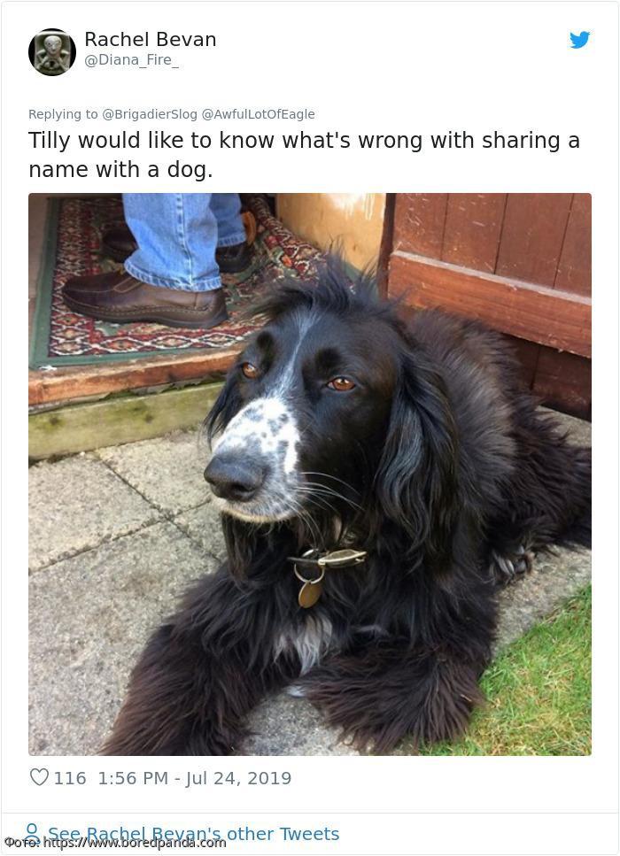 Беременная женщина требует от владелицы переименовать своего пса, поскольку хочет назвать дочь собачьей кличкой
