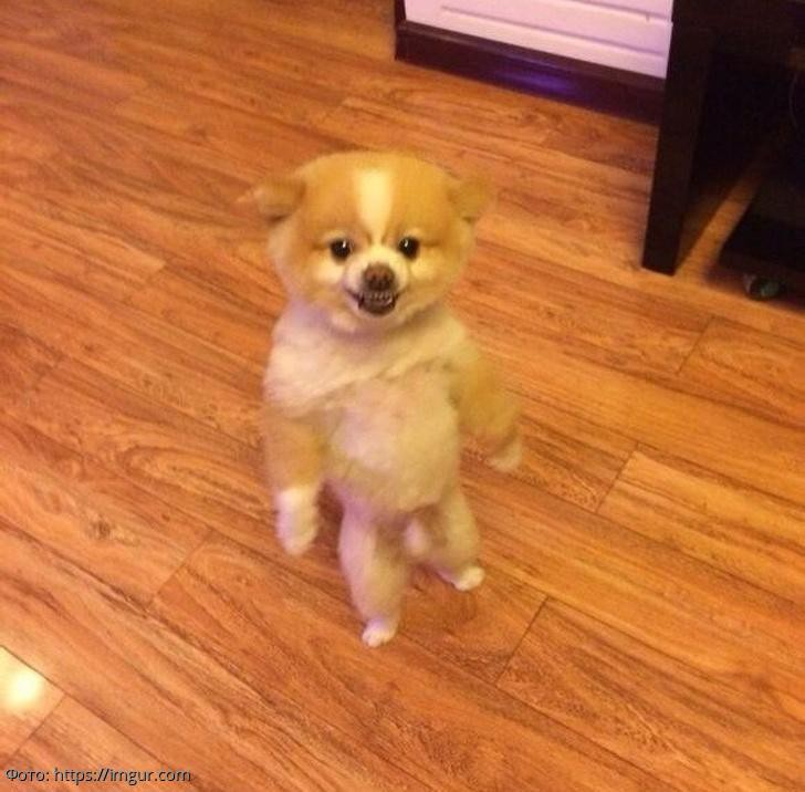 15 фотографий собак, которые заставят вас улыбнуться
